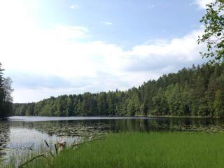 フィンランドの森。