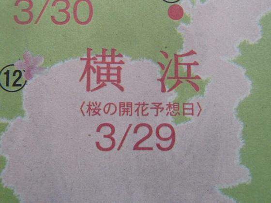 桜開花予報 (1)