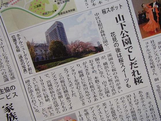 桜開花予報 (4)