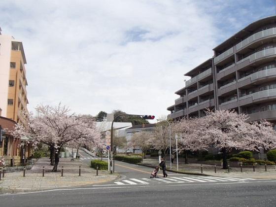 桜吹雪 (1)