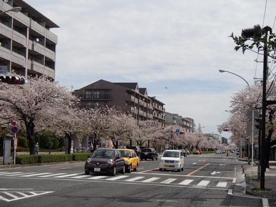桜吹雪 (5)