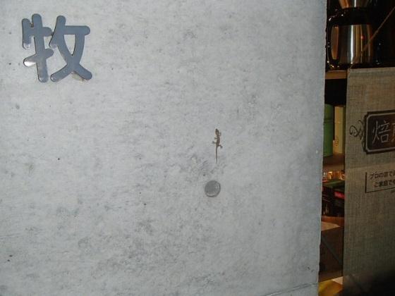 ヤモリ (1)