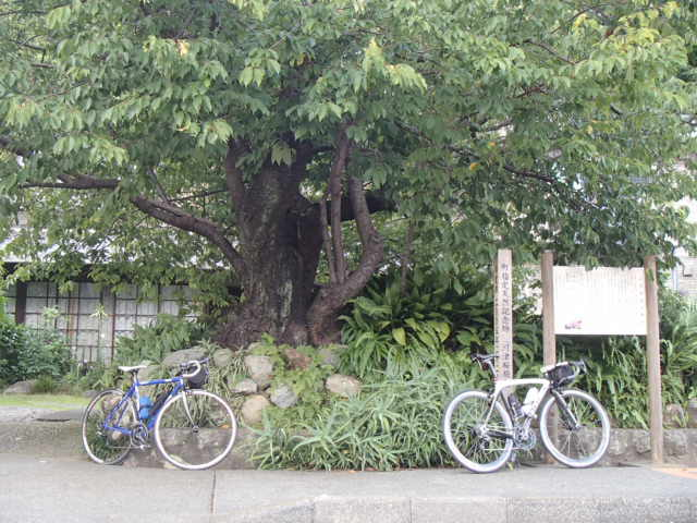 下田へ (27)