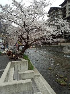 マラソン_桜