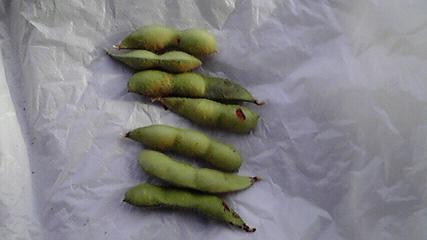 枝豆629収穫