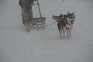 2014年2月高山ワンパラ 089