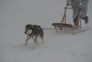 2014年2月高山ワンパラ 075