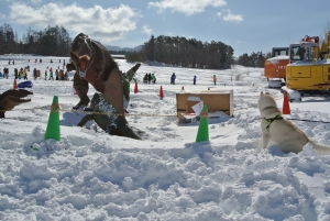 2014年2月16日23日犬橇練 003
