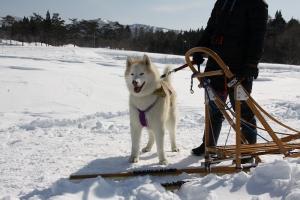2014年2月16日23日犬橇練 015