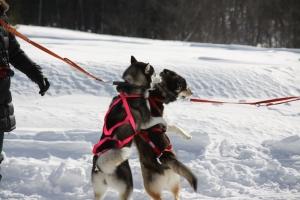 2014年2月16日23日犬橇練 025