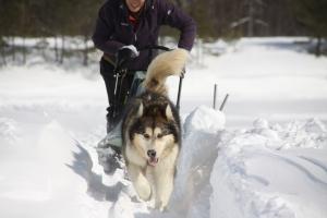2014年2月16日23日犬橇練 019