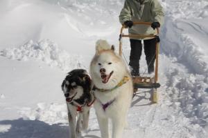 2014年2月16日23日犬橇練 018