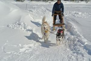 2014年2月16日23日犬橇練 011