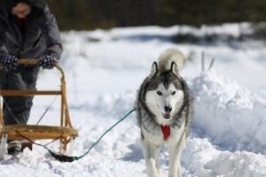 2014年2月16日23日犬橇練 033