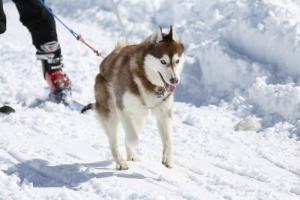 2014年2月16日23日犬橇練 035