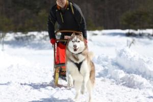 2014年2月16日23日犬橇練 032