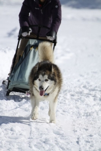 2014年2月16日23日犬橇練 029