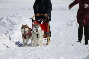 2014年2月16日23日犬橇練 040