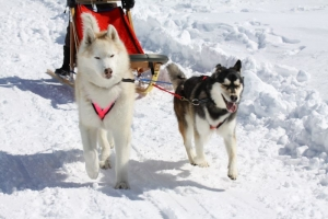2014年2月16日23日犬橇練 043