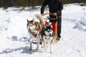 2014年2月16日23日犬橇練 045