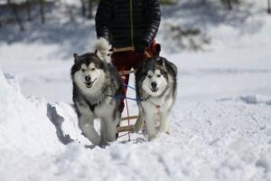 2014年2月16日23日犬橇練 036