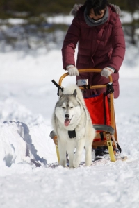 2014年2月16日23日犬橇練 047