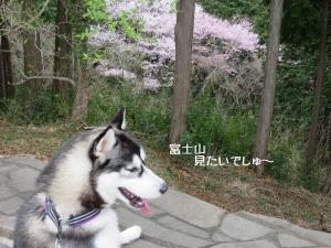 2013-03-伊豆 067