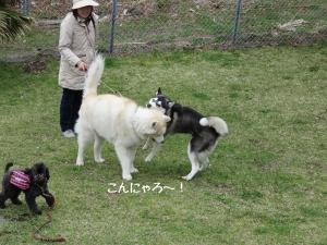 2013-03-伊豆 092