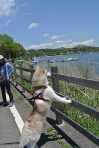 2014-05 山中湖 001 (245)
