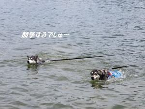 2013-05 山中湖 048