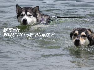 2013-05 山中湖 047