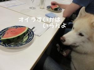 2014-07-20 菅平夏合宿 027