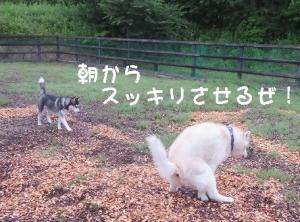 2014-07-20 菅平夏合宿 031