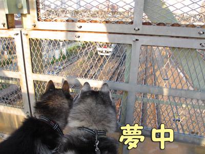 鉄犬ポトフ&スフレ