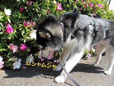 花を食べるスフレ