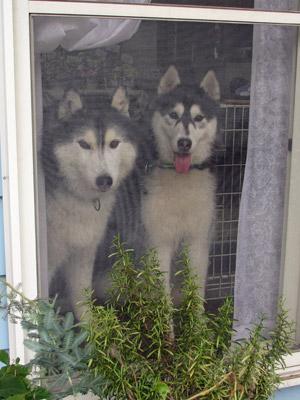 窓辺の兄弟
