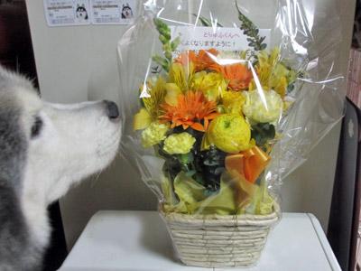 かえで家から貰ったお花