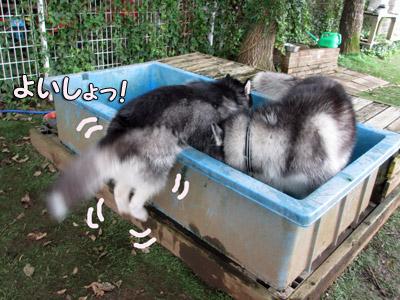 ちびプール