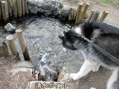 湧水ポイントの観察