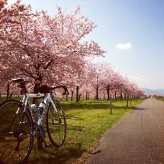 20140501CAAD10桜CR