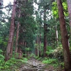 20140526CAAD10小管神社杉並木