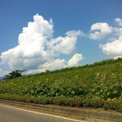 20140721CAAD10木島平ヒマワリ