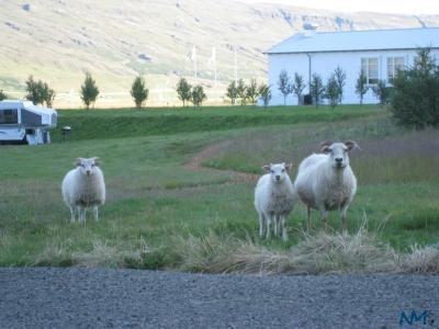 lamb-family.jpg