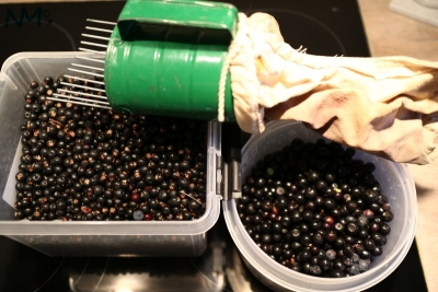wild_berries.jpg