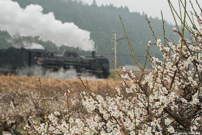 秩父鉄道 C58