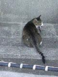 勉強せぇよ!-お魚くわえた野良猫