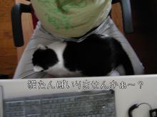 勉強せぇよ!-猫たんぽ