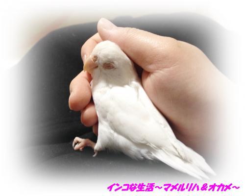 image[4]3_convert_20140301211050