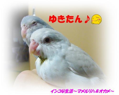 P1090019_convert_20140217123525.jpg