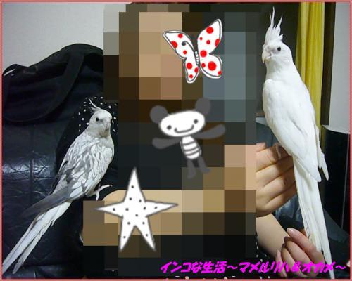 P1110166_convert_20140409154510.jpg